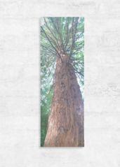 Tree - Panorama: 8x24 Wood wall art - $135.00 USD