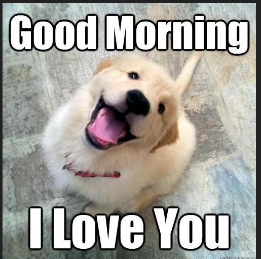 Good Morning Meme Dog : Cute good morning puppy meme imgkid the image
