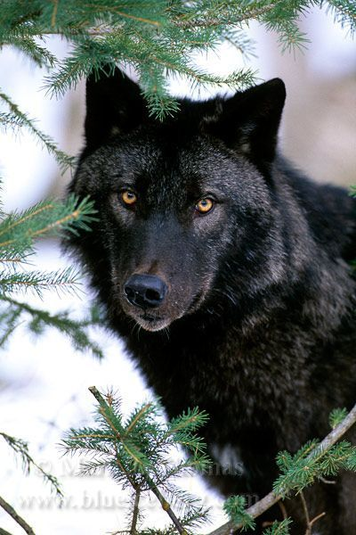 Natural Selection Wildlife and Nature Photography - Mark J Thomas