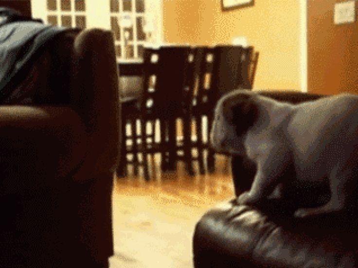 Los mejores GIFs de perros - Taringa!