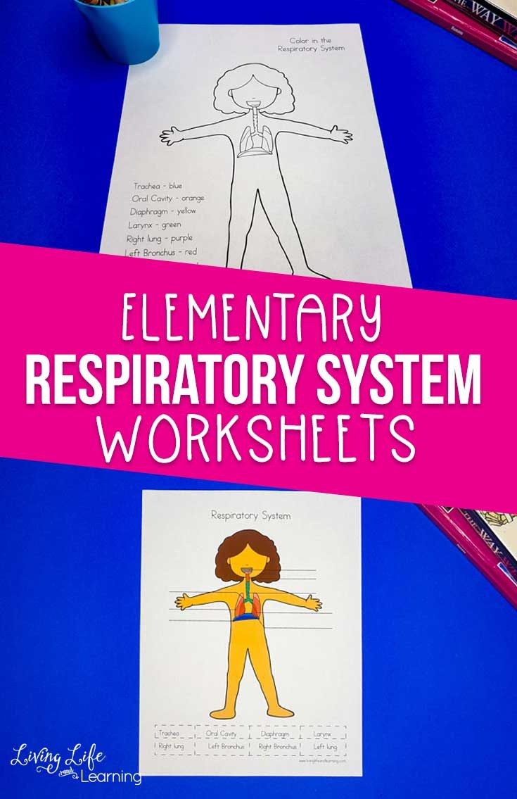 Respiratory System Worksheets For Kids Respiratory System Human Body Lesson Worksheets For Kids