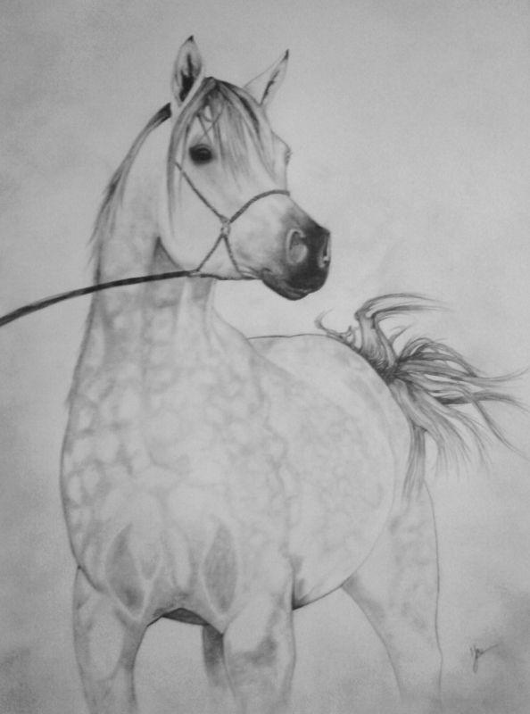Dessin chevaux portrait dessin cheval chevaux Animaux Crayon  - Pur sang arabe