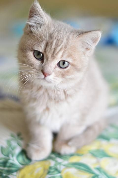 .this kitten is the same color as my first cat, Louie. I want to find a other one. You don't see a lot of them. We call them buttercup.