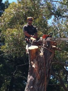 Goolwa Tree Lopping - For friendly reliable and affordable tree lopping services in Goolwa contact us on 0435-818-380 for your obligation free quote.  #Goolwa #Tree #Lopping #Services 0435818380