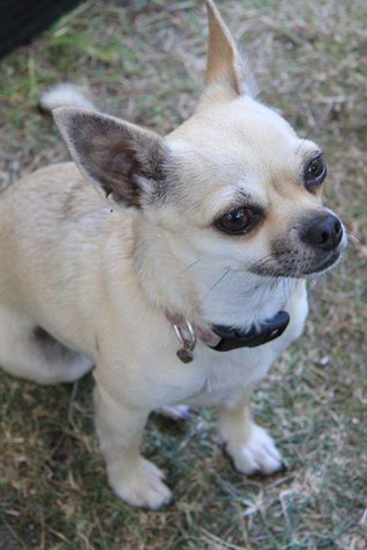 Animals Mammals Wildlife Horse Birds Dogs Chihuahua