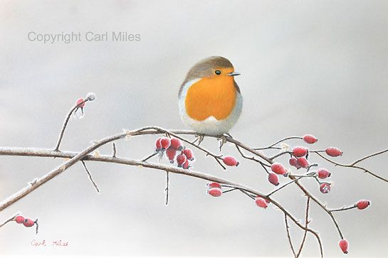 Robin Bird Art by artist Carl Miles