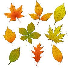 Autumn leaves - Google Search