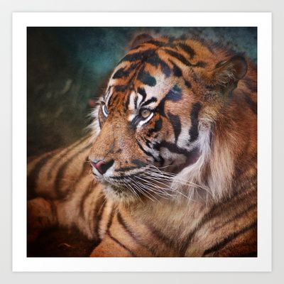 The mysterious eye of the tiger Art Print by Guido Montañés - $20.00