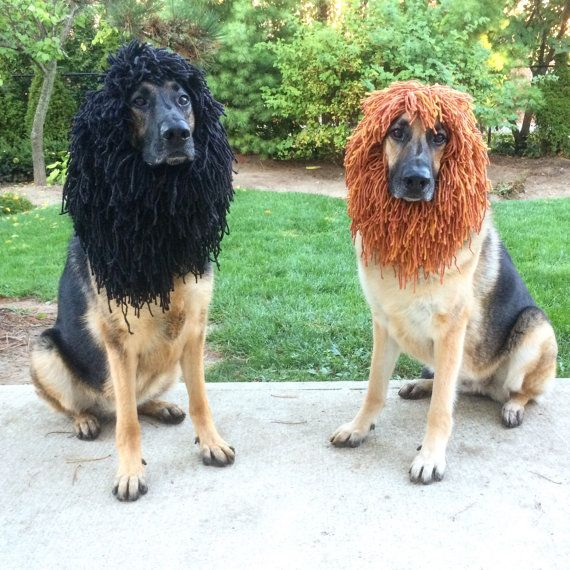 The 25+ best Dog lion mane ideas on Pinterest | Dog lion ...