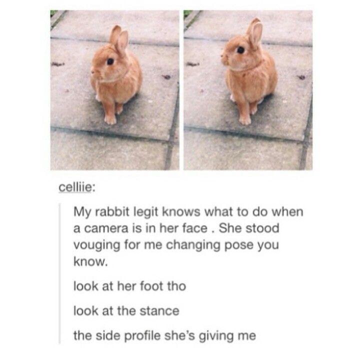 Omg that bunny is goals