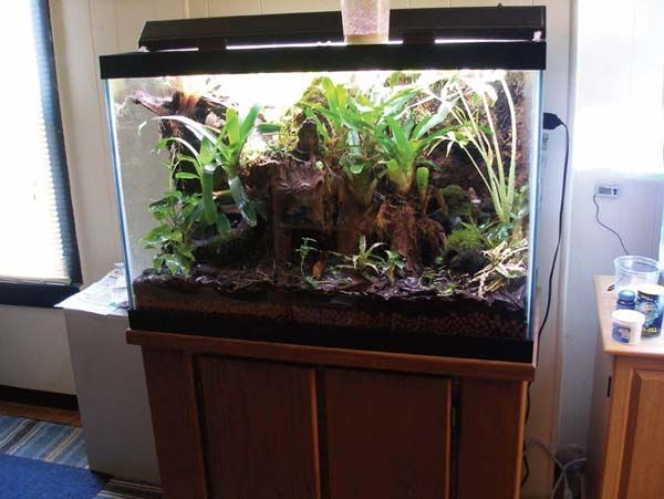 25+ best ideas about Frog Terrarium on Pinterest ... 10 Gallon Dart Frog Vivarium