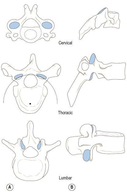cervical spine facet orientation