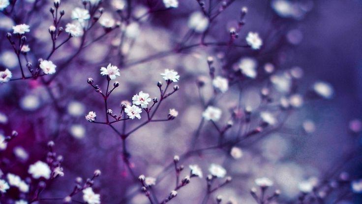 Kleine Blumenzweige