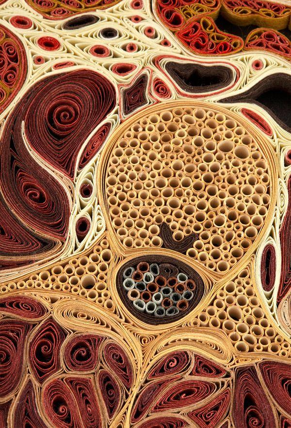 Lisa Nilsson crée ces coupes anatomiques réalistes en roulant des feuilles de papier et en les plaçant sur leur tranche. ( Via )