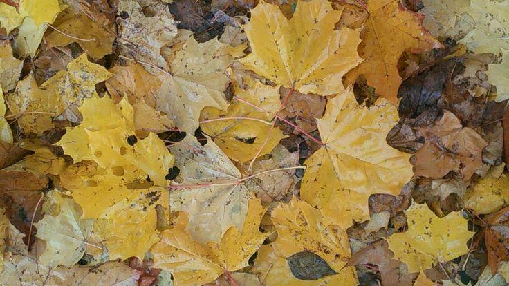 Осенний ковер. Фото Е.Кейль