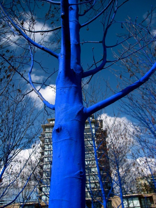 The Blue Trees - an installation by Konstantin Dimopoulos for the Vancouver Biennale photo by Vancouver Biennale: