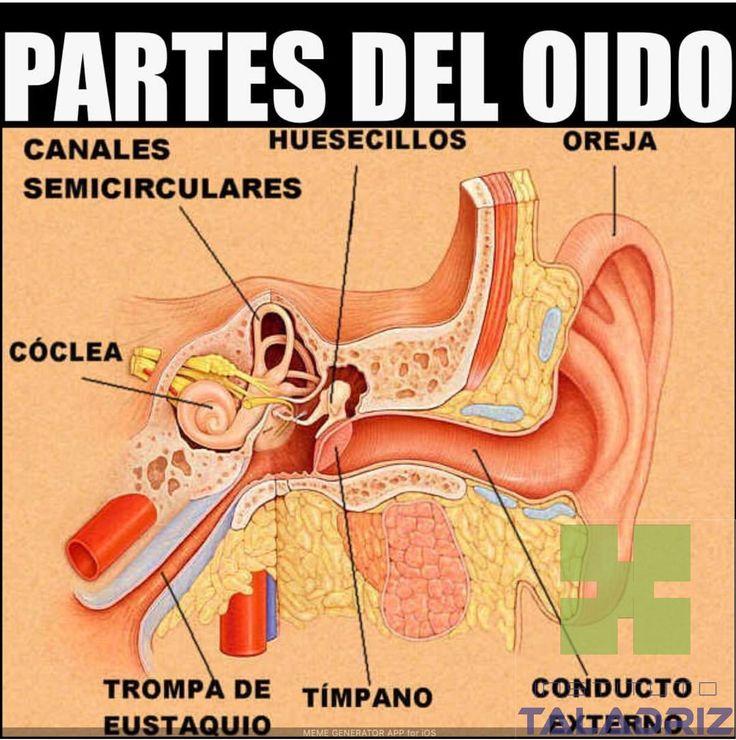 #InstitutoTALADRIZ #auxiliardefarmacia #secretariadomedico www.InstitutoTALADRIZ.com.ar