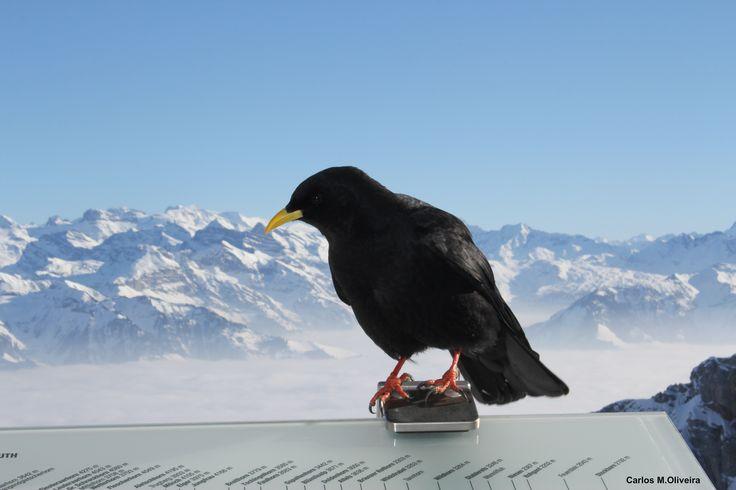 Monte Pilatus, Lucern, Switzerland