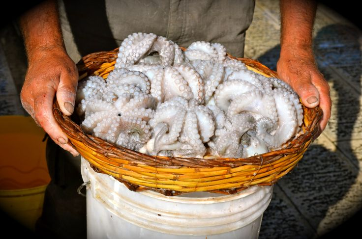 Octopus. Fish Market in Bari. https://urbanforaging.nl