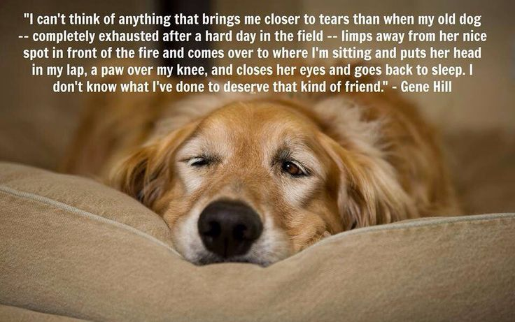 11 Best Senior Dogs Images On Pinterest Animal Rescue Old Dogs