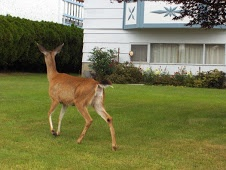 Deer Resistant Gardening: Scarecrow Motion Activated Sprinkler