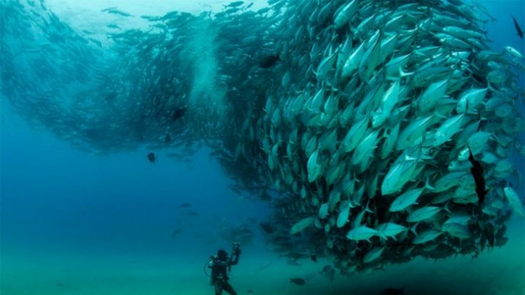 A tornado of fish looks like a scary sea monster demon