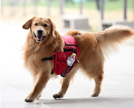Backpack for Large Dogs