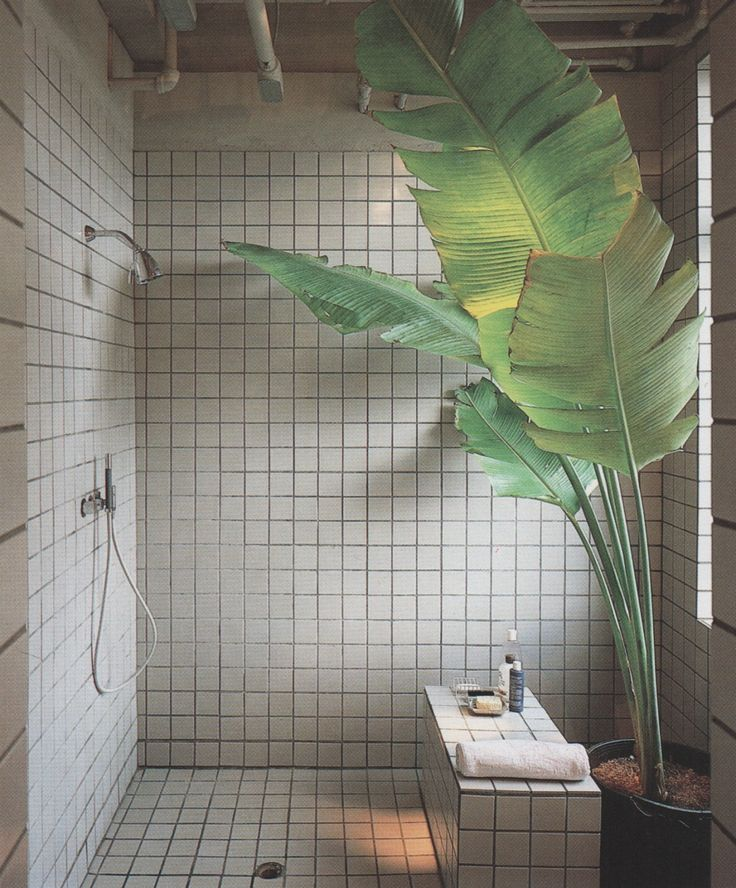 Oh my gosh! Love the idea of a plant in the shower or even a furn. That would be awesome!!
