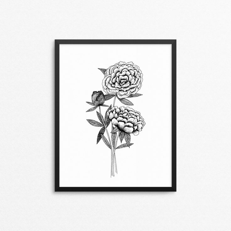 Home decor wall art with hand drawn peonies in vintage style, black ink on white.