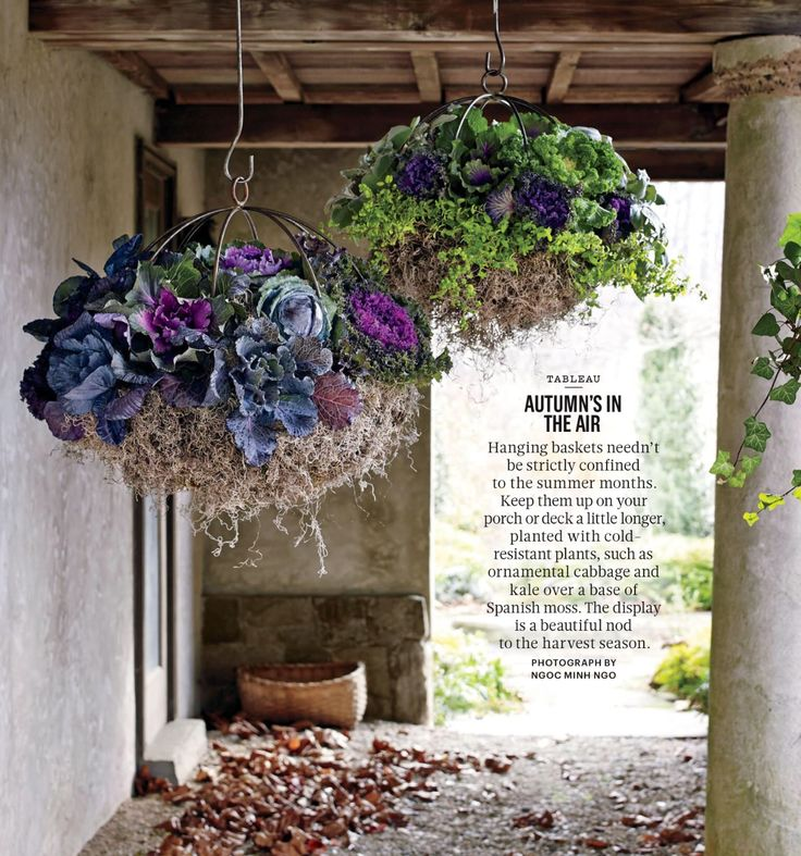Ornamental cabbages hanging baskets