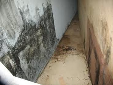 Visit For More Information About Mold Removal Because Residence Owner Is  Aware Of, Structural Mold Growth Can Be An Exceptionally Tough Drawback To  Take ...