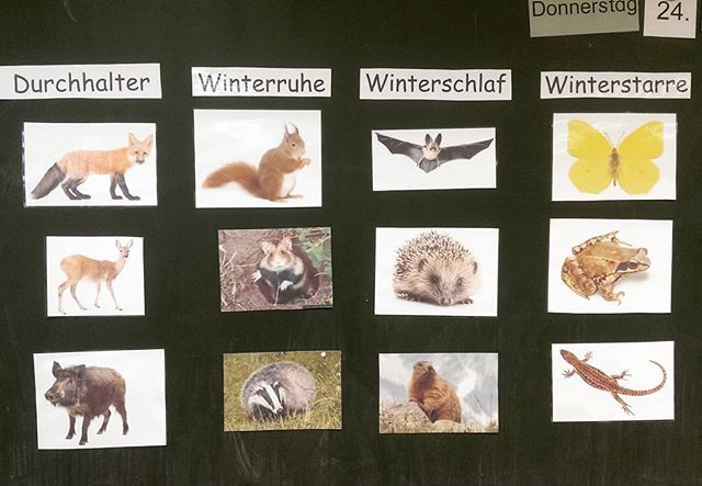 """Kleine Unterrichtseinheit zum Thema """"Tiere im Winter"""". Nachdem wir geklärt haben, was Winterstarre etc bedeutet, bin ich mit einer selbstgeschriebenen Geschichte eingestiegen, bei der all die Tiere drin vorkommen und erzählen, ob sie Winterschlaf,... machen. Dann sollten sie zuordnen. Dann gab es noch ein AB zum selber zuordnen der Tiere. Hat allen Spaß gemacht  #grundschulideen #lehrer #lehrerfreuden #lehrerin #grundschule #grundschullehrer #grundschullehrerin #school #primaryschool…"""