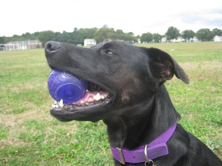 Rattle Bottle Dog Training