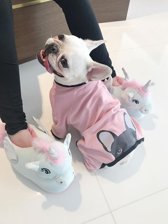 fbaeb30b8 French Bulldog in a Onesie from The Frenchie Store, www.thefrenchiestore.com