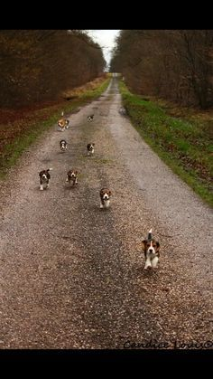 Beagle road...run like you own the road