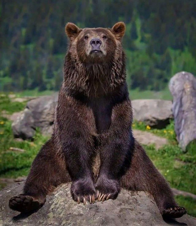Поздравлением работников, картинки прикольного медведя