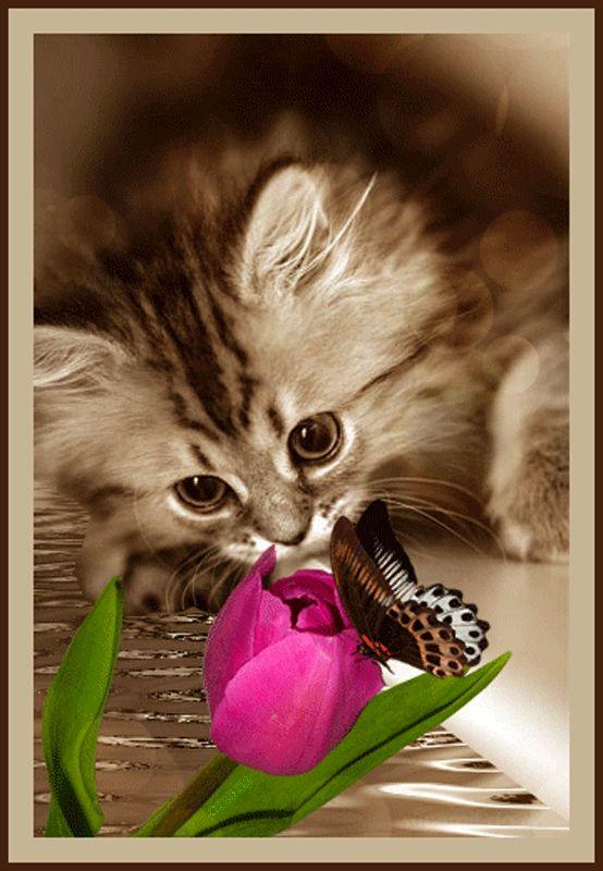 Воробей, анимация красивые картинки с котятами