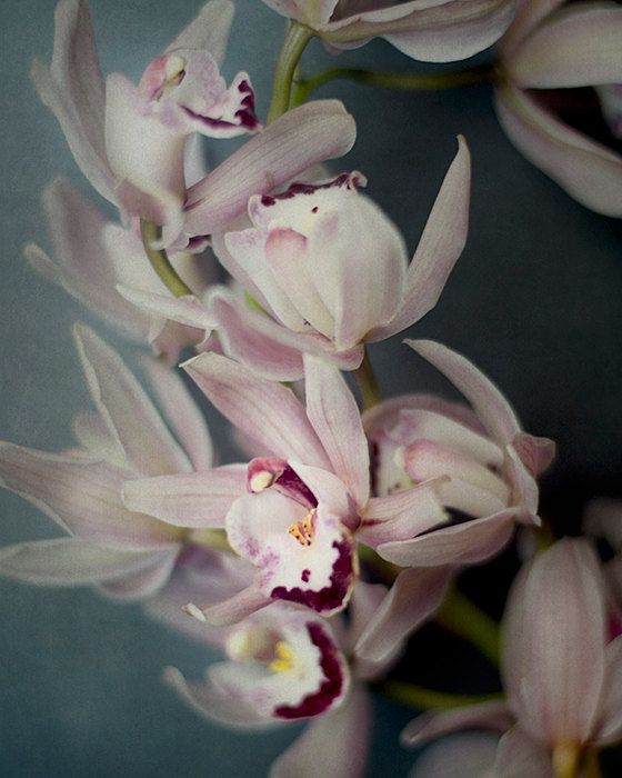 Orchid Photography Botanical  Print Dark by PureNaturePhotos #decor