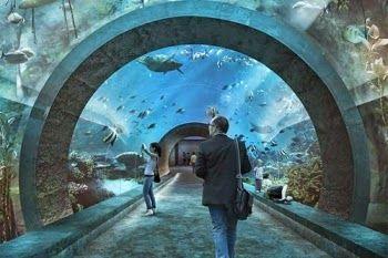 BLOG DO ARRETADINHO: Aquário do Zoo não receberá dinheiro público