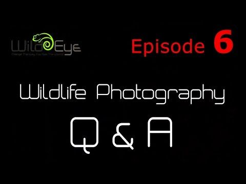 Wildlife Photography Q&A: Episode 6