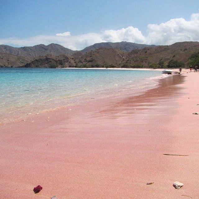 Another pink beach at Komodo National Park  Next Weekly komodo sailing trip  Jul: 22-25, 29-1 Aug: 05-08 (group 2 available), 12-15 (group 2 available), 17-20, 18-21, 19-22, 26-29 (group 2 available) Sep: 02-05, 09-12, 16-19,23-26, 30-03 Oct: 07-10,  14-17, 21-24, 28-30 Nov: 04-07,11-14, 18-21, 25-28 Dec: 2-5, 9-12, 16-19, 23-26,29-01 . Trip details/reservation /private trip arrangement pls mail us at info@kakabantrip.com . #kakabantriptokomodo #komodo #komodoisland #pulaukomodo #gililawa…