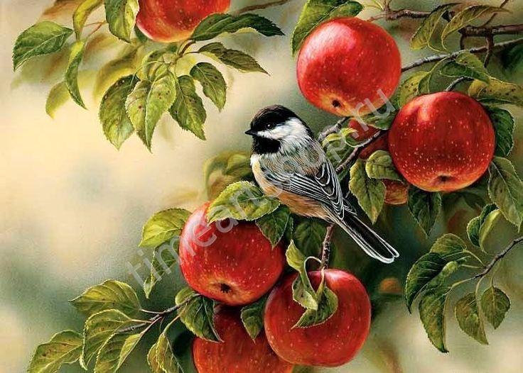 "Rosemary Millette ""Воробушек среди яблок"", картина раскраска по номерам, картина своими руками, размер 40*50см, цена 750 руб"