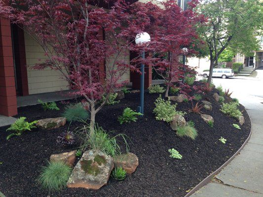 Front of the building with drought resistant plants and black mulch AFTER Lara's intervention | Yelp