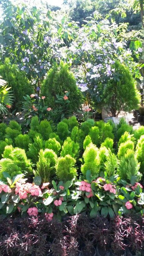 Plantas ornamentales en Catarina Masaya
