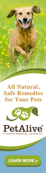 There is an alarming amount of scary essential oil advice on the Web. Learn which essential oils to avoid for pets and related precautions.