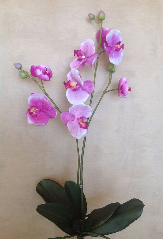 82cm Real Touch Phalaenopsis Orchids  2 stems with by Anggerik