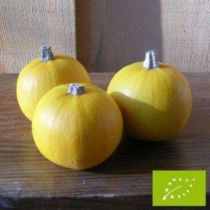 Courge Pomme d'Or bio -Une vieille variété française produisant de petits fruits jaune or à maturité, idéal farcis. La chair, peu épaisse, à un goût délicat. Très bonne conservation des fruits.