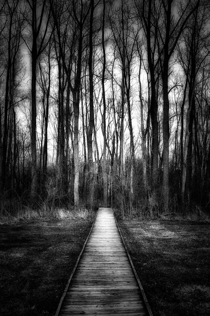 Dusk In Early April The Beavercreek Wetlands Nature Preserve Greene County Ohio Black And White Landscape Photography By Jim Crotty