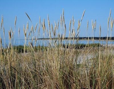 White sand beaches - many miles...#skillinge #Österlen #Sweden