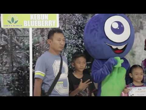 blueberry festival jakarta